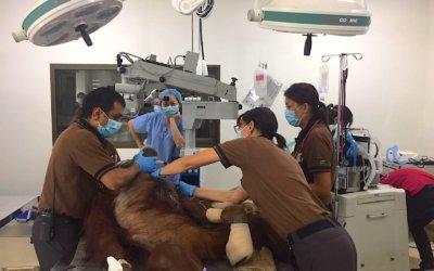 Cataract Surgery at Singapore Zoo